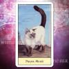 Таро Кошачий Взгляд (Cat's Eye Tarot)